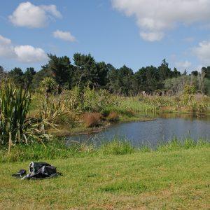 Pond at Spencer Beach