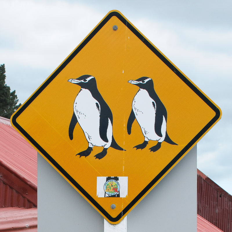 Blue Penguins at Oamaru